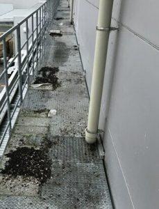 工場の外廊下の鳩の糞の清掃前